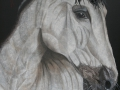 HORSE IN HEARTH